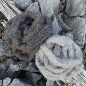 canaan woolshed new-zealand sliver Wool gotland sheep